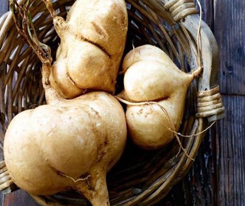 hạt giống củ đậu