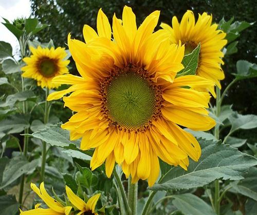 hạt giống hoa đẹp