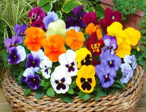 hạt giống hoa
