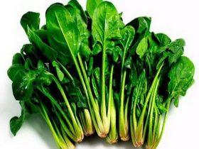 hạt giống rau cải