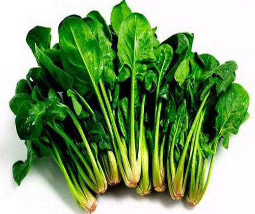 Cải bó xôi | Hạt giống cải bó xôi tốt nhất