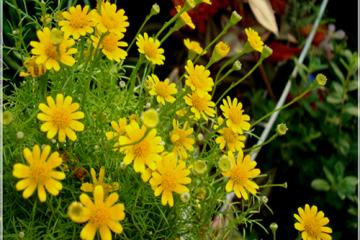 Cách phòng tránh sâu bệnh cho hoa