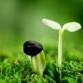 nhận biết hạt giống hoa
