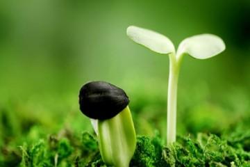 Cách nhận biết hạt giống hoa tốt