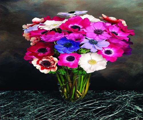 hoa thu mẫu đơn