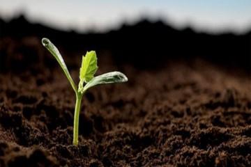 Cách bảo quản hạt giống rau tốt nhất