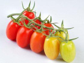 hạt giống cà chua tí hon