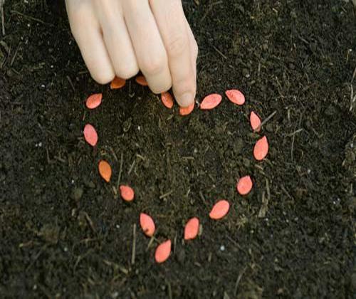 cách chăm sóc hạt giống hoa