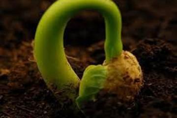 Cách chăm sóc hạt giống hoa tốt nhất