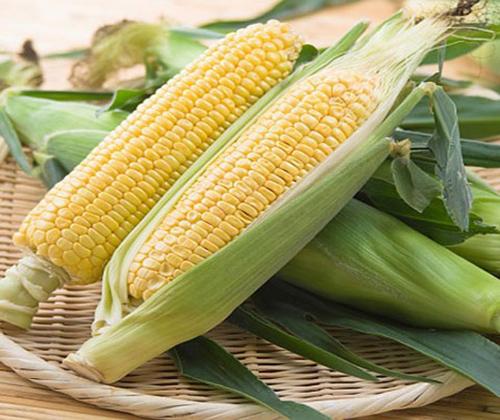 mua hạt giống ngô