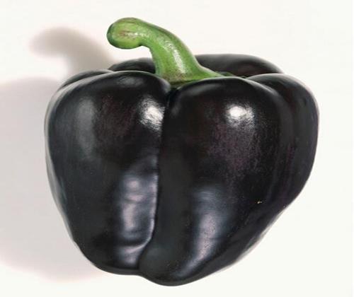 hạt giống ớt