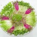 trồng rau mầm trên giấy ăn