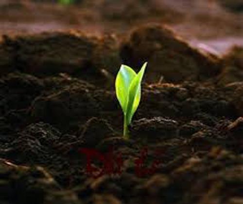 xử lý hạt giống hoa