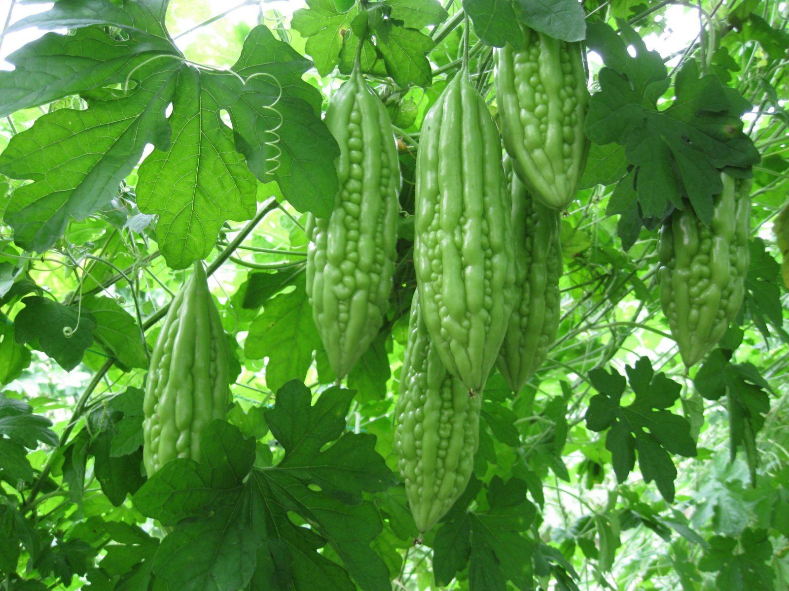 Kĩ thuật trồng rau sạch