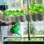 cách trồng rau sạch
