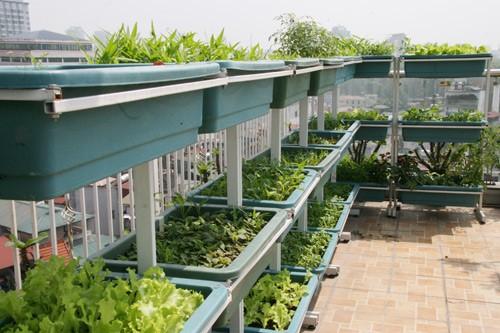 cách trồng rau khi nhà hẹp