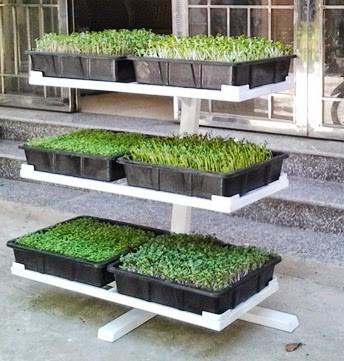 kệ trồng rau trong nhà