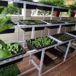 kệ trồng hạt giống