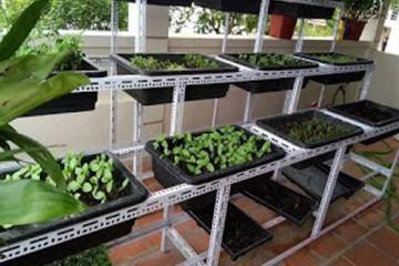 Cách tiết kiệm diện tích trồng hạt giống nhất