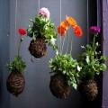 hướng dẫn trồng hoa bằng cách treo giỏ