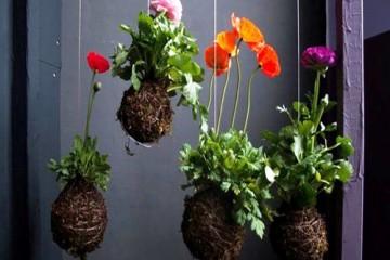 Cách trồng hoa treo hiệu quả nhất