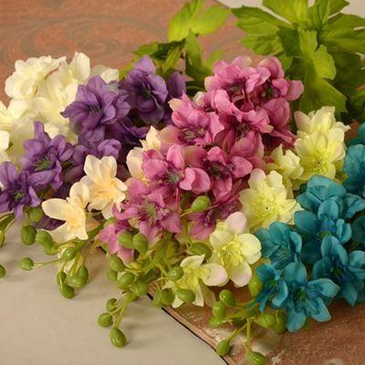 hoa phi yến đẹp