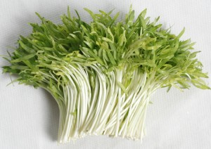 hạt giống rau muống mầm