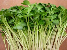 rau mầm củ cải trắng a