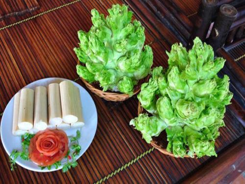 cách-trồng-rau-mầm-đá-e1503106570994
