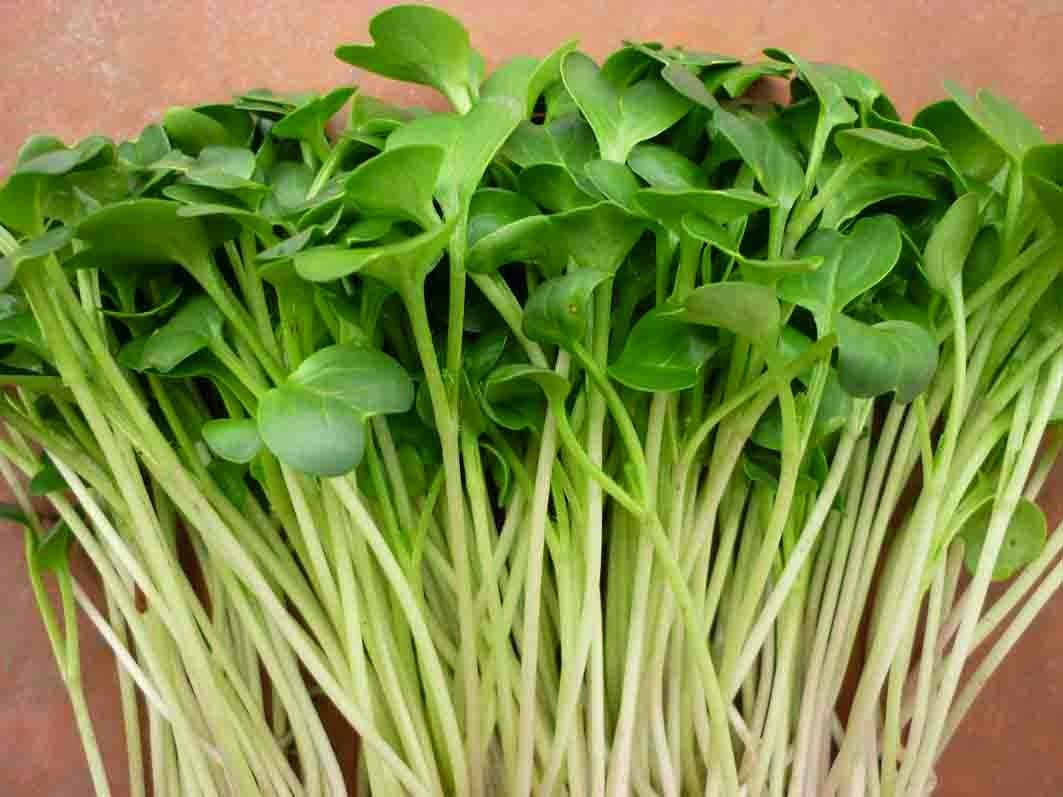 Công dụng và phương pháp giao trồng rau mầm italia tại nhà