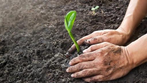 hạt giống ươm mầm đúng cách
