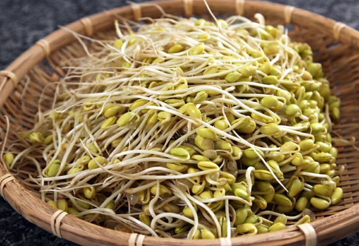 rau mầm đậu nành