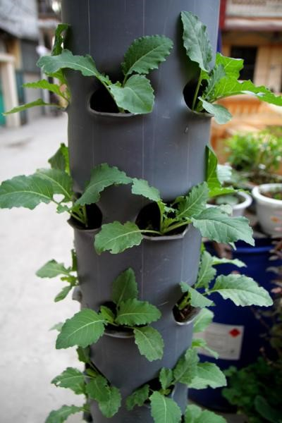 Cách trồng hạt giống rau độc lạ