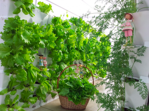 Những phong cách trồng hạt giống rau độc, lạ