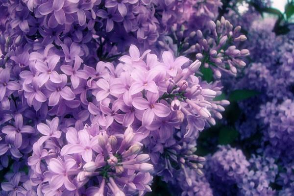 hoa thể hiện cho tình yêu đẹp