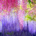 Loài hoa thể hiện cho tình yêu