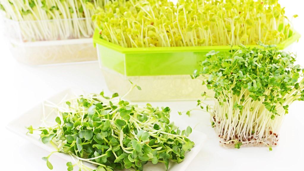 Tác dụng của rau mầm với sức khỏe mà bạn chưa biết