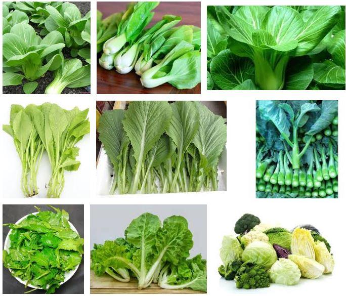 Hạt giống rau dễ trồng